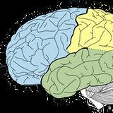 Sportowcy mają żywsze mózgi niż studenci